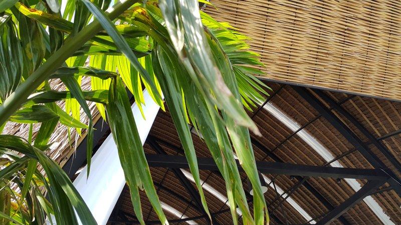 20150501 143749 คิดจะพัก คิดถึง Piasim Garden จุดแวะพักมีสไตล์ ถ.สายบางปะกง – ฉะเชิงเทรา