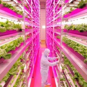 สวนผักภายในอาคารที่ใหญ่ที่สุดในโลก ปลูกผักกาดได้วันละ10,000หัว 22 - Farm