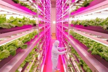 สวนผักภายในอาคารที่ใหญ่ที่สุดในโลก ปลูกผักกาดได้วันละ10,000หัว 13 - indoor farm