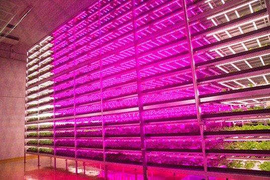 สวนผักภายในอาคารที่ใหญ่ที่สุดในโลก ปลูกผักกาดได้วันละ10,000หัว 16 - Farm