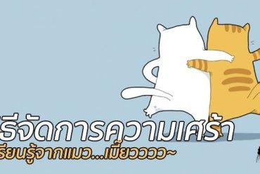 เรียนรู้วิธีจัดการความเศร้าจากแมว! 17 - pet