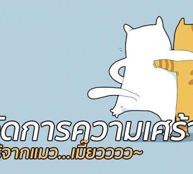 เรียนรู้วิธีจัดการความเศร้าจากแมว! 16 - pet