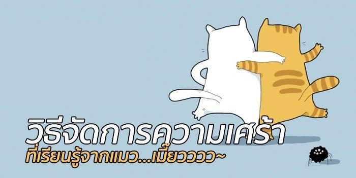เรียนรู้วิธีจัดการความเศร้าจากแมว! 13 - pet