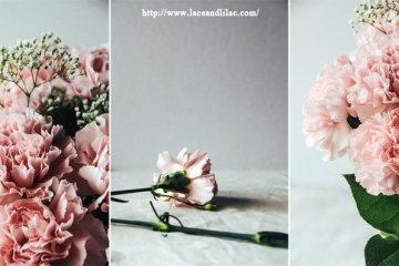 ดอกคาร์เนชั่นมอบให้ในวันแม่...สื่อถึงความรักที่มีต่อแม่ 12 - flora