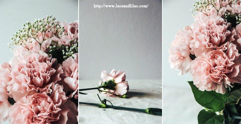 ดอกคาร์เนชั่นมอบให้ในวันแม่...สื่อถึงความรักที่มีต่อแม่ 13 - flora