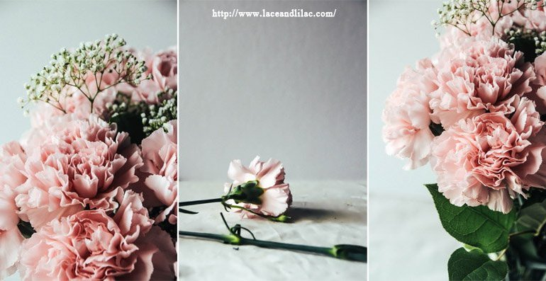 ดอกคาร์เนชั่นมอบให้ในวันแม่...สื่อถึงความรักที่มีต่อแม่ 26 - Gift