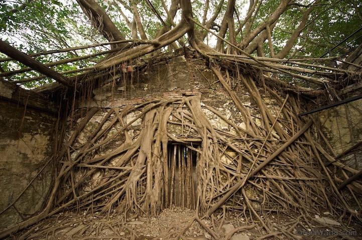 เมื่อธรรมชาติทวงคืนพื้นที่..คือการทำลายหรืองานสร้างสรรค์ 13 - abandon building