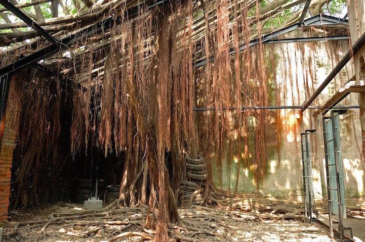 เมื่อธรรมชาติทวงคืนพื้นที่..คือการทำลายหรืองานสร้างสรรค์ 21 - abandon building