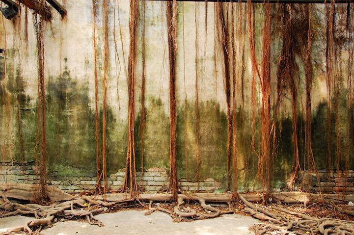 เมื่อธรรมชาติทวงคืนพื้นที่..คือการทำลายหรืองานสร้างสรรค์ 25 - abandon building