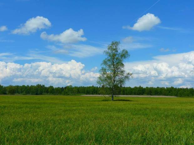 tree-7835_1280