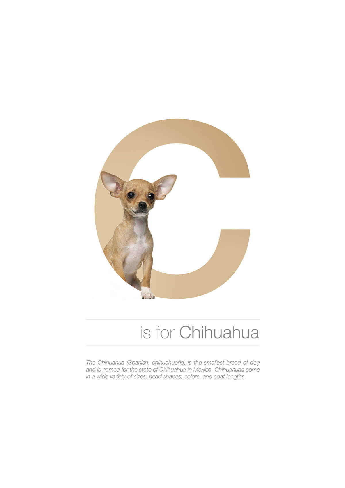 C ตัวอักษรกราฟฟิค A Z สายพันธุ์หมาไอเดียน่ารักจากดีไซน์เนอร์โรมาเนีย