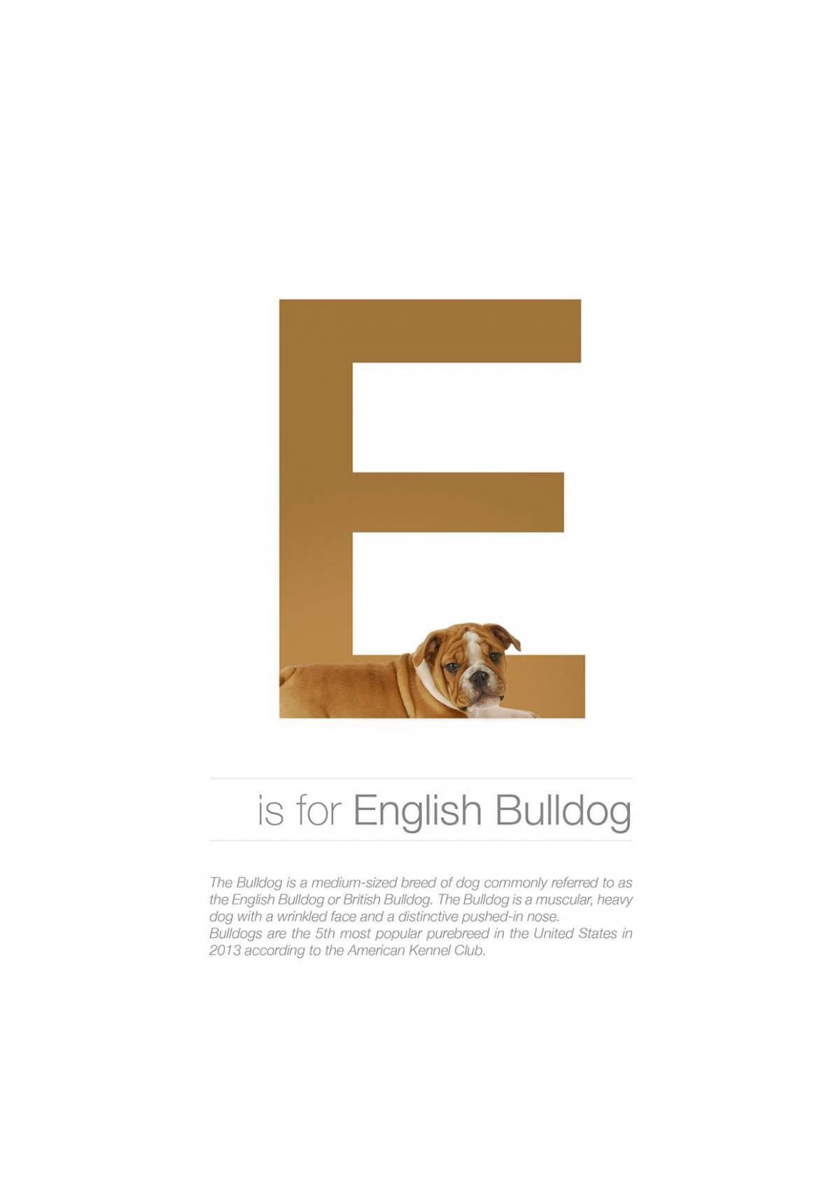 E ตัวอักษรกราฟฟิค A Z สายพันธุ์หมาไอเดียน่ารักจากดีไซน์เนอร์โรมาเนีย