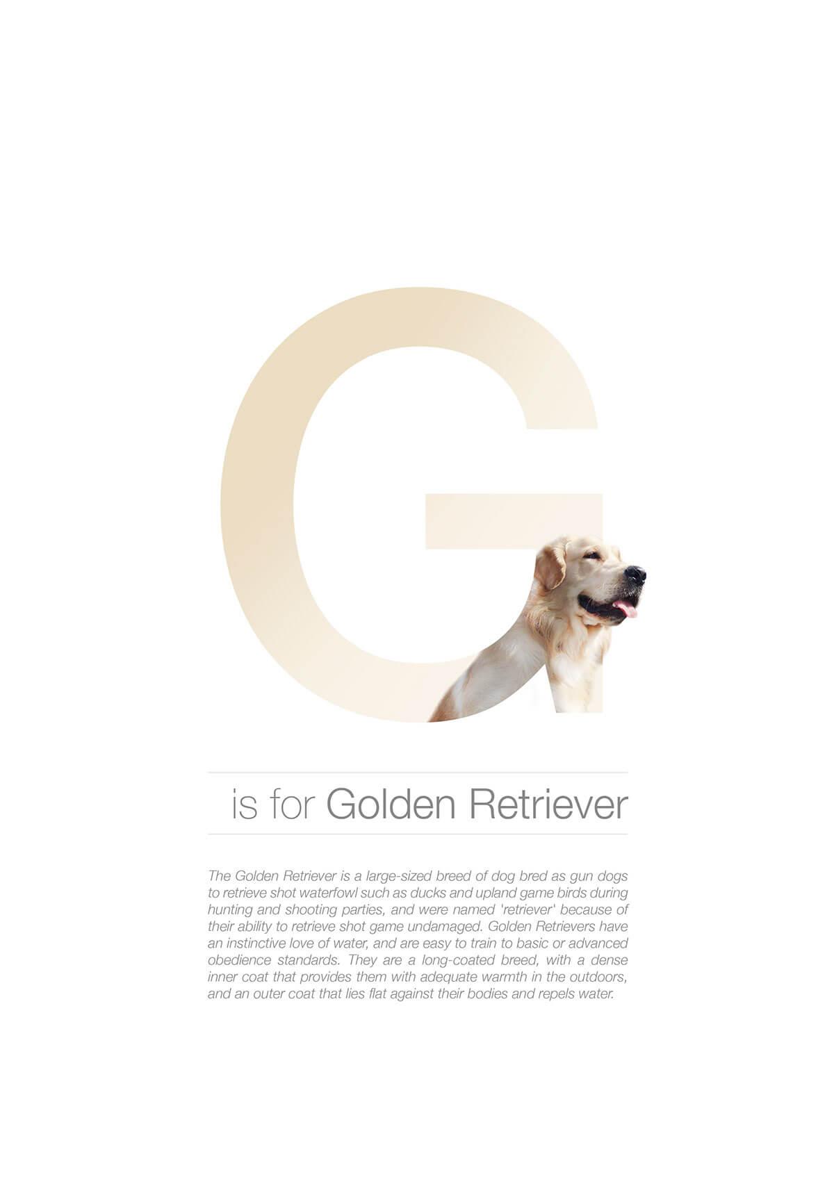 G ตัวอักษรกราฟฟิค A Z สายพันธุ์หมาไอเดียน่ารักจากดีไซน์เนอร์โรมาเนีย