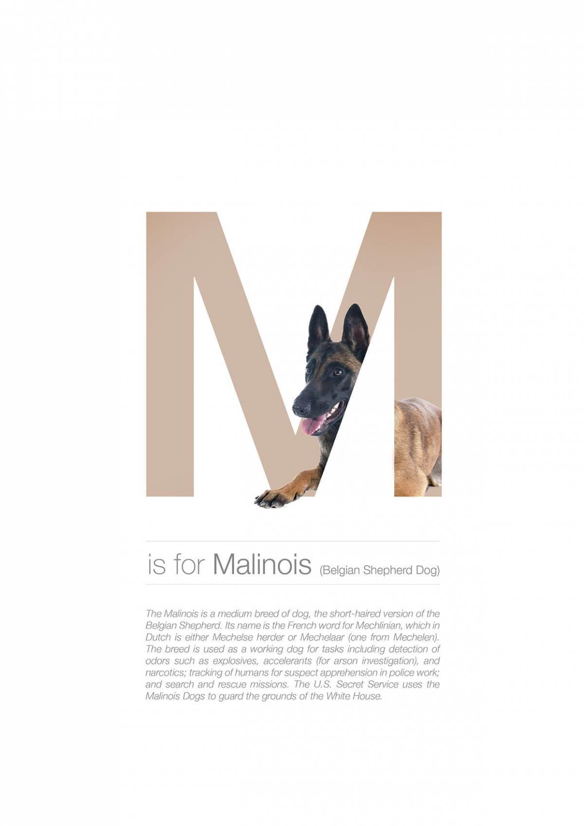 M ตัวอักษรกราฟฟิค A Z สายพันธุ์หมาไอเดียน่ารักจากดีไซน์เนอร์โรมาเนีย