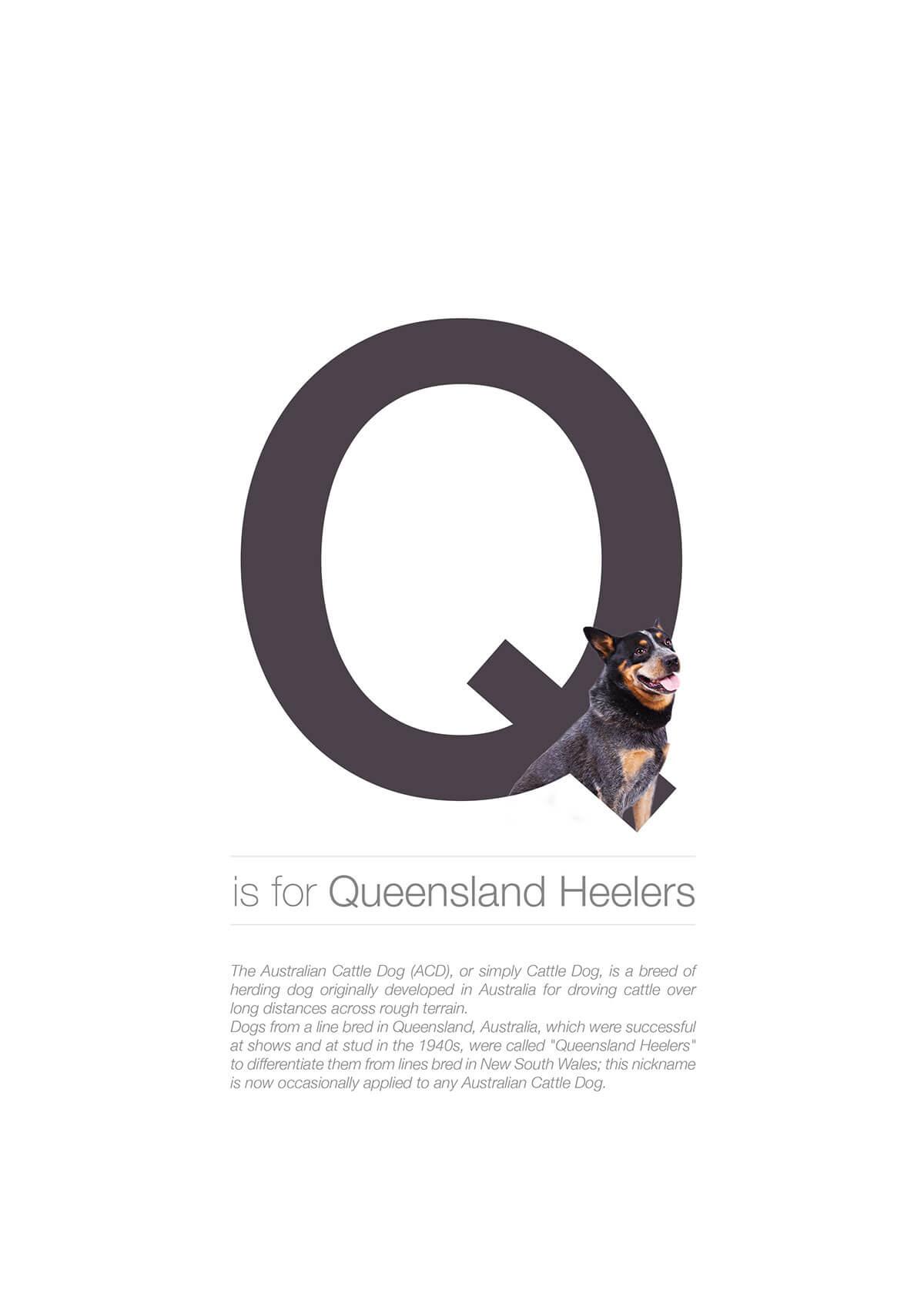 Q ตัวอักษรกราฟฟิค A Z สายพันธุ์หมาไอเดียน่ารักจากดีไซน์เนอร์โรมาเนีย