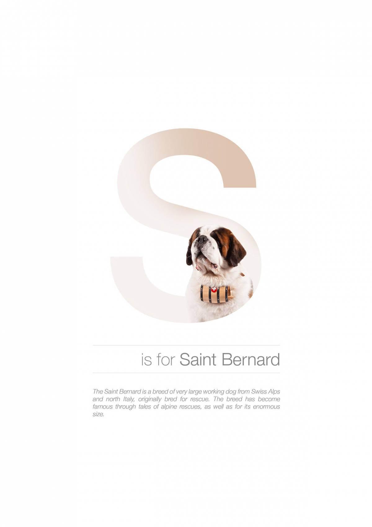 S ตัวอักษรกราฟฟิค A Z สายพันธุ์หมาไอเดียน่ารักจากดีไซน์เนอร์โรมาเนีย