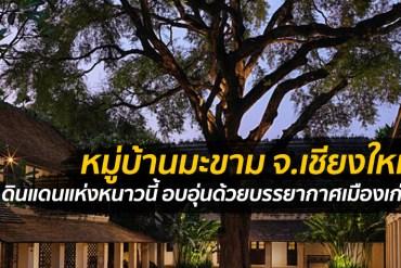Tamarind Village หมู่บ้านมะขาม จ.เชียงใหม่ ดินแดนแห่งหนาวนี้ 14 - Chiang-Mai