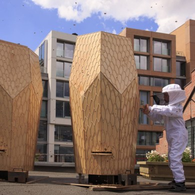 Vulkan Beehive สร้างสรรค์บ้านไม้ให้กับผึ้งกว่า 160,000 ตัว 15 - Architecture