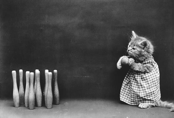 ภาพโบราณ100ปี..หมาแมวแต่งตัวย้อนยุค ..คนถ่ายช่างอินเทรนจริงๆ 15 - pet