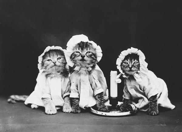 ภาพโบราณ100ปี..หมาแมวแต่งตัวย้อนยุค ..คนถ่ายช่างอินเทรนจริงๆ 16 - pet