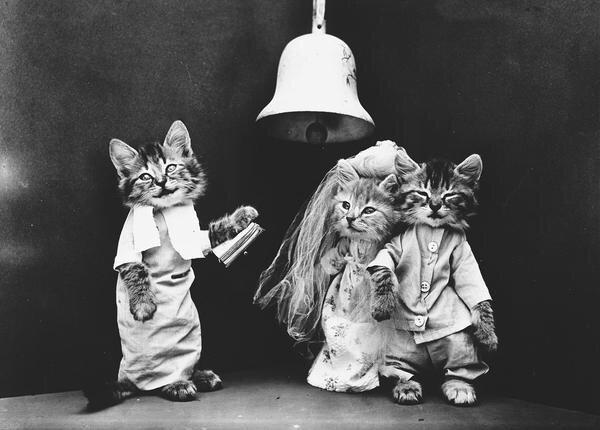 ภาพโบราณ100ปี..หมาแมวแต่งตัวย้อนยุค ..คนถ่ายช่างอินเทรนจริงๆ 20 - pet
