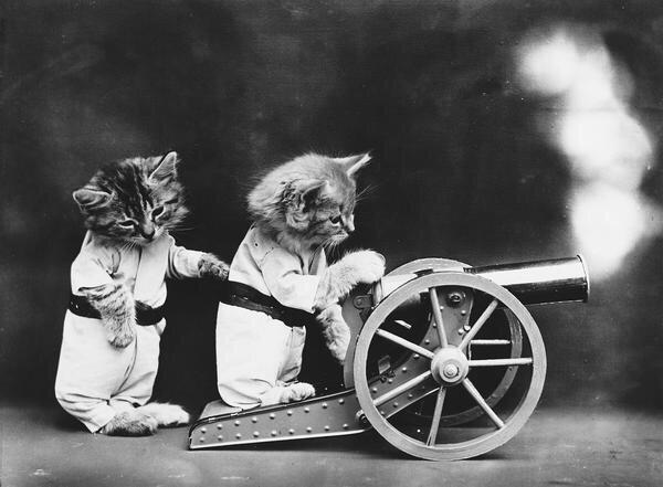 ภาพโบราณ100ปี..หมาแมวแต่งตัวย้อนยุค ..คนถ่ายช่างอินเทรนจริงๆ 23 - pet