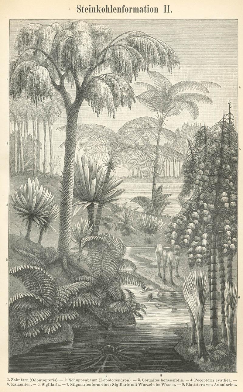 """ทำความรู้จัก """"เฟินต้นสีเงิน"""" ต้นไม้นำทางชาวเผ่าเมารี สัญลักษณ์ประเทศนิวซีแลนด์ 14 - ต้นเฟินสีเงิน"""