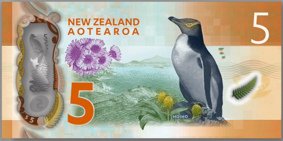 5banknotebackmoney ชมนกเพนกวินตาเหลือง ที่นิวซีแลนด์ สัตว์เฉพาะถิ่นของดินแดนซีกโลกใต้