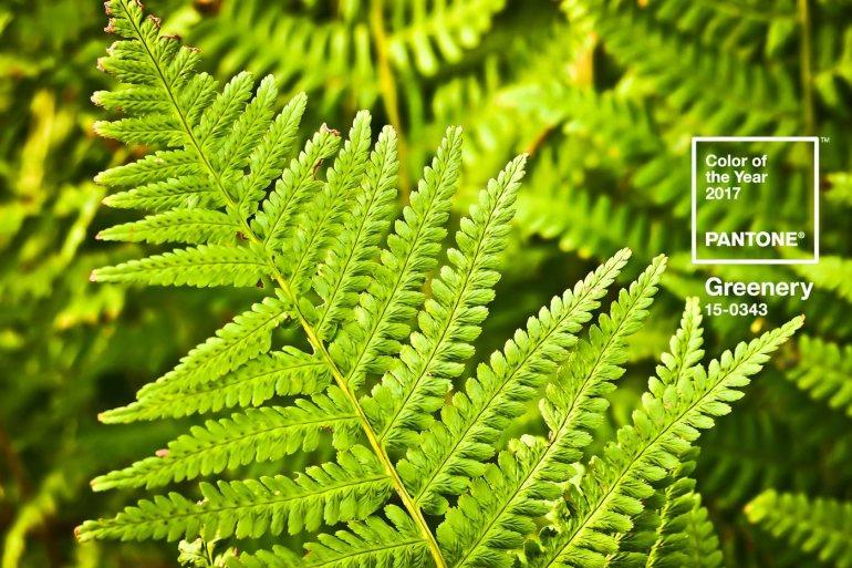 """""""Greenery"""" เมื่อเขียวธรรมชาติกลายเป็นสีแห่งปี 2017 จาก Pantone พร้อมดูสีย้อนหลังถึงปี 2010 23 - DESIGN"""