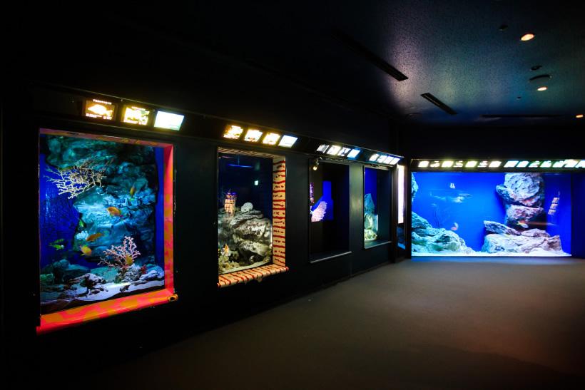 deep sea พิพิธภัณฑ์สัตว์ทะเล ชูราอิมิ (Churaumi Aquaium) แห่งโอกินาวา (Okinawa)