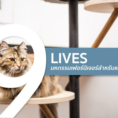 ทาสแมวต้องร้องว้าว งานแสดงเฟอร์นิเจอร์สำหรับแมวโดยเฉพาะ 43 -