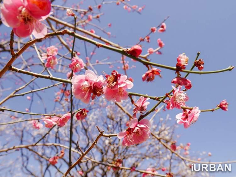 30 วิธีเที่ยวญี่ปุ่นด้วยตัวเอง เตรียมของ แอพ มารยาท เน็ต 4G ต่างประเทศ 25 - Advertorial