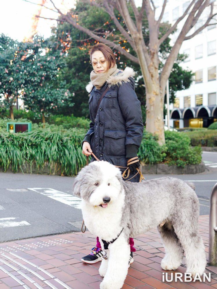 30 วิธีเที่ยวญี่ปุ่นด้วยตัวเอง เตรียมของ แอพ มารยาท เน็ต 4G ต่างประเทศ 60 - AIS (เอไอเอส)