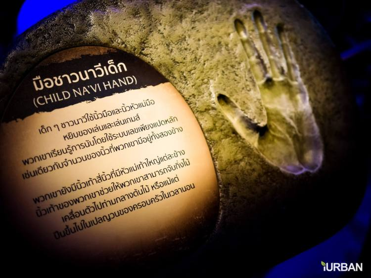 avatar18 750x563 รีวิว AVATAR : Discover Pandora Bangkok นิทรรศการ Interactive จากหนังที่ขายดีที่สุดในโลก