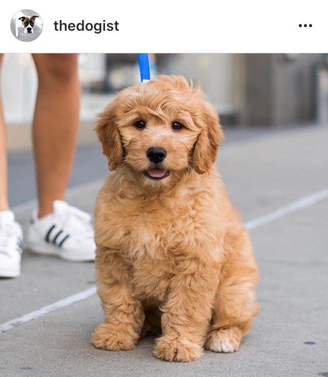 10 Instagram Accounts ไอจีคอนเทนต์ดี๊ดี ที่ควรค่าแก่การฟอลโล่!! 35 - IG