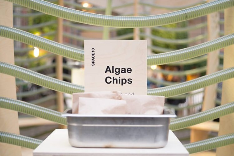07 750x501 IKEA Space10 โชว์วิจัยแหล่งอาหารใหม่เพื่อโลกอนาคต