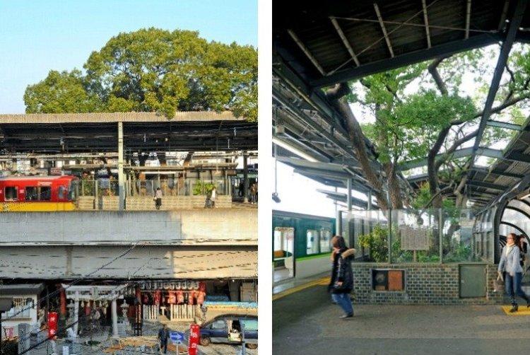 สถานีรถไฟญี่ปุ่นเจาะสถานีเพื่อรักษาต้นไม้อายุ 700 ปี 3 - greenery homepage