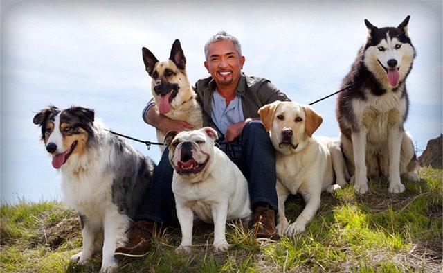 """""""ซีซาร์ มิลลาน"""" ส่งรายการ """"Cesar's Recruit Asia Season 2"""" เฟ้นหาสุดยอดนักปรับพฤติกรรมสุนัขแห่งเอเชีย 13 -"""