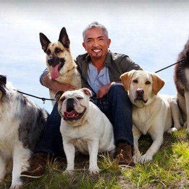 """""""ซีซาร์ มิลลาน"""" ส่งรายการ """"Cesar's Recruit Asia Season 2"""" เฟ้นหาสุดยอดนักปรับพฤติกรรมสุนัขแห่งเอเชีย 14 -"""