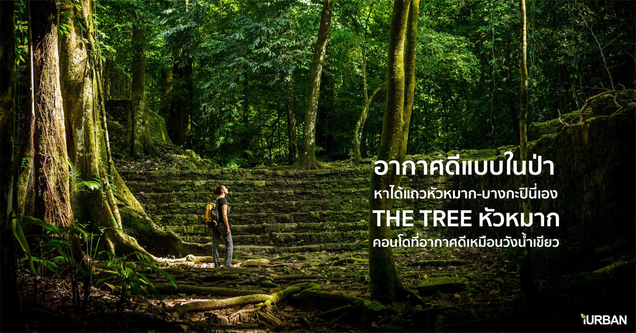 """ไม่ต้องรอพักร้อนเพื่อชาร์จพลัง ที่คอนโด """"THE TREE หัวหมาก"""" มีอากาศดีระดับวังน้ำเขียวทุกวัน 13 - Premium"""