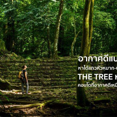 """ไม่ต้องรอพักร้อนเพื่อชาร์จพลัง ที่คอนโด """"THE TREE หัวหมาก"""" มีอากาศดีระดับวังน้ำเขียวทุกวัน 16 - Premium"""