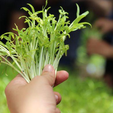 สามพรานโมเดล อะคาเดมี่ เปิด5เทรนด์ น่ารู้สำหรับผู้บริโภคอินทรีย์รับปี2562 พร้อมเปิดหลักสูตรการขับเคลื่อนเกษตรอินทรีย์ตามแนวทางสามพรานโมเดล 16 -