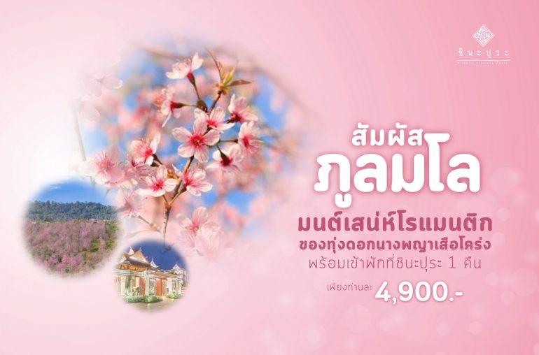 """""""โรงแรมชินะปุระ"""" ชวนนักเดินทาง ชมซากุระเมืองไทยที่ """"ภูลมโล"""" กับแพ็คเกจสุดคุ้มรับลมหนาว 13 -"""