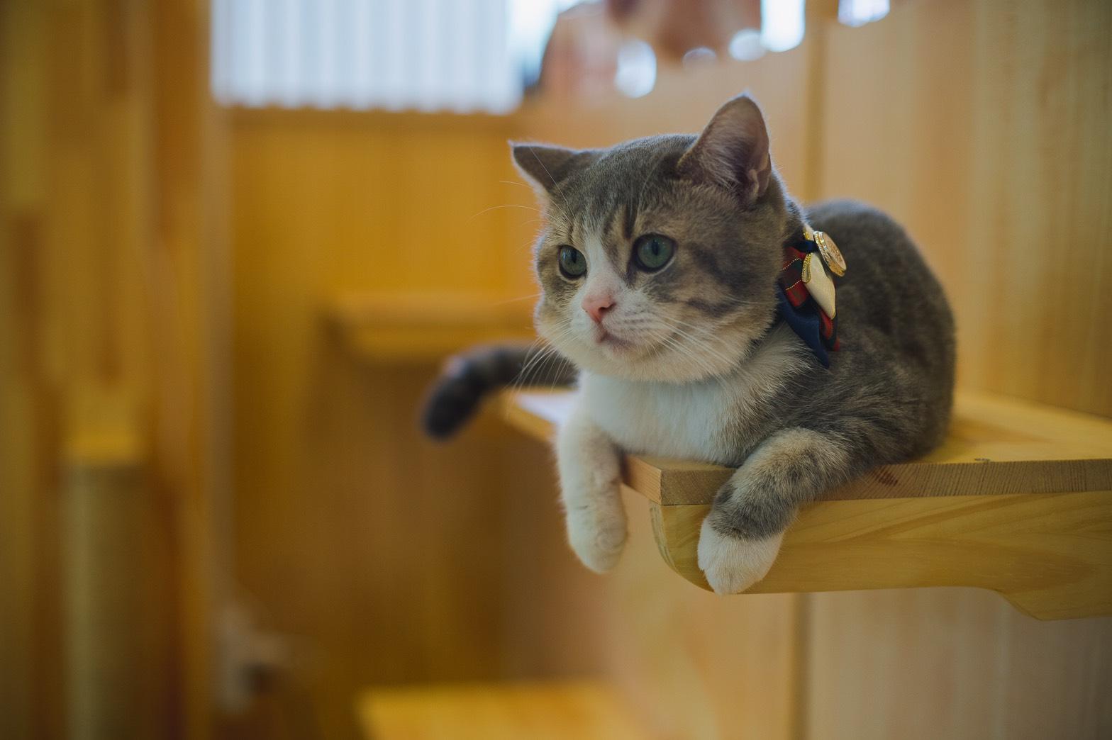 TRAIL and TAIL Pet-Friendly Community แหล่งแฮงค์เอ้าท์ใหม่ของคนเมือง พร้อมเติมความสุขให้สัตว์เลี้ยงแสนรักได้ทุกวัน 23 -
