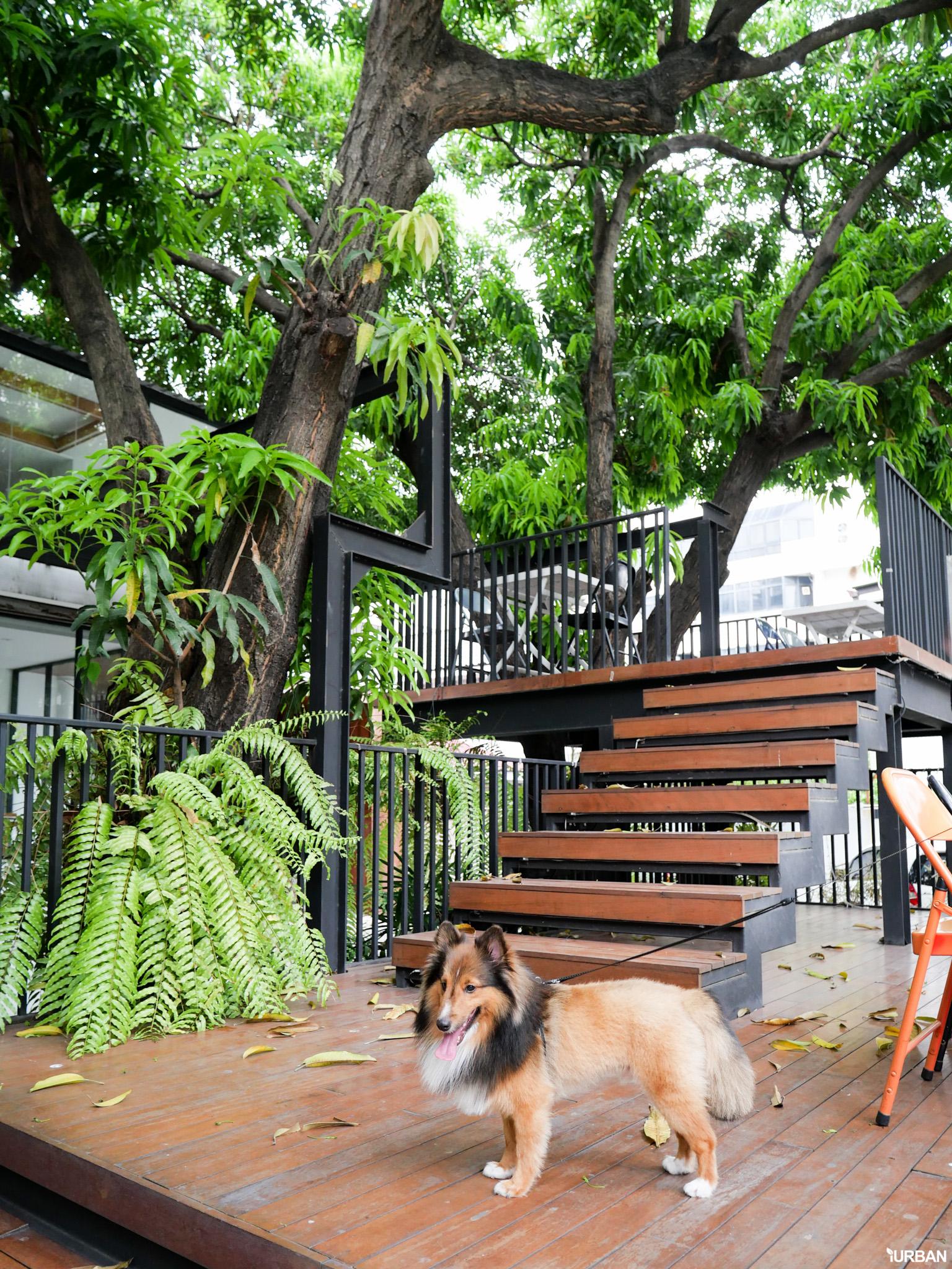The Running Dog Cafe ร้านกาแฟ #หมาเข้าได้ สไตล์สถาปนิก ย่านสาทร 20 - cafe