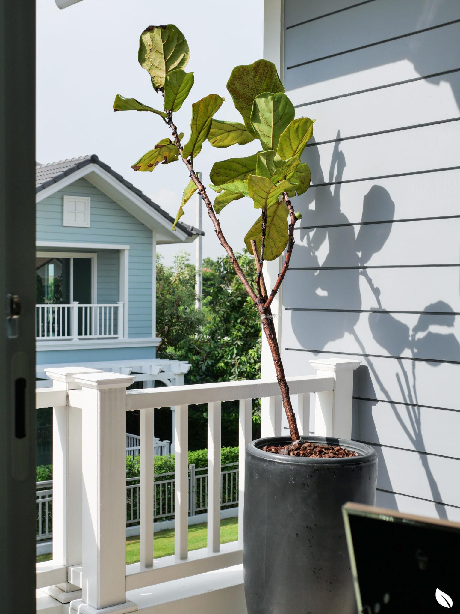 รีวิว บุราสิริ ปัญญาอินทรา บ้านเดี่ยวสวยสไตล์ New England Colonial ส่วนกลางกว่า 13 ไร่โดย SANSIRI 92 - burasiri