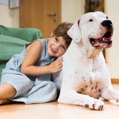 โรคผิวหนังในสัตว์เลี้ยง ปัญหาหนักอกที่มาพร้อมหน้าฝน รพส.ทองหล่อ แนะเคล็ดลับดีๆ ป้องกันสัตว์เลี้ยงแสนรักห่างไกลโรคผิวหนัง 15 -