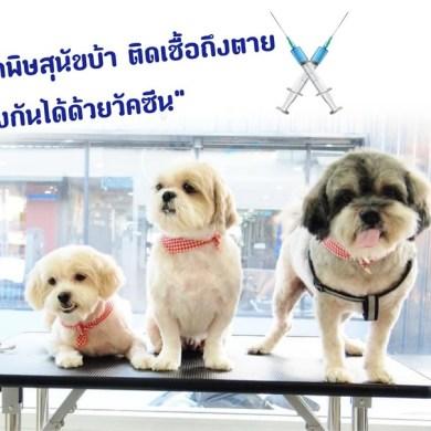 28 ก.ย. วันป้องกันโรคพิษสุนัขบ้าโลก 2019 16 -
