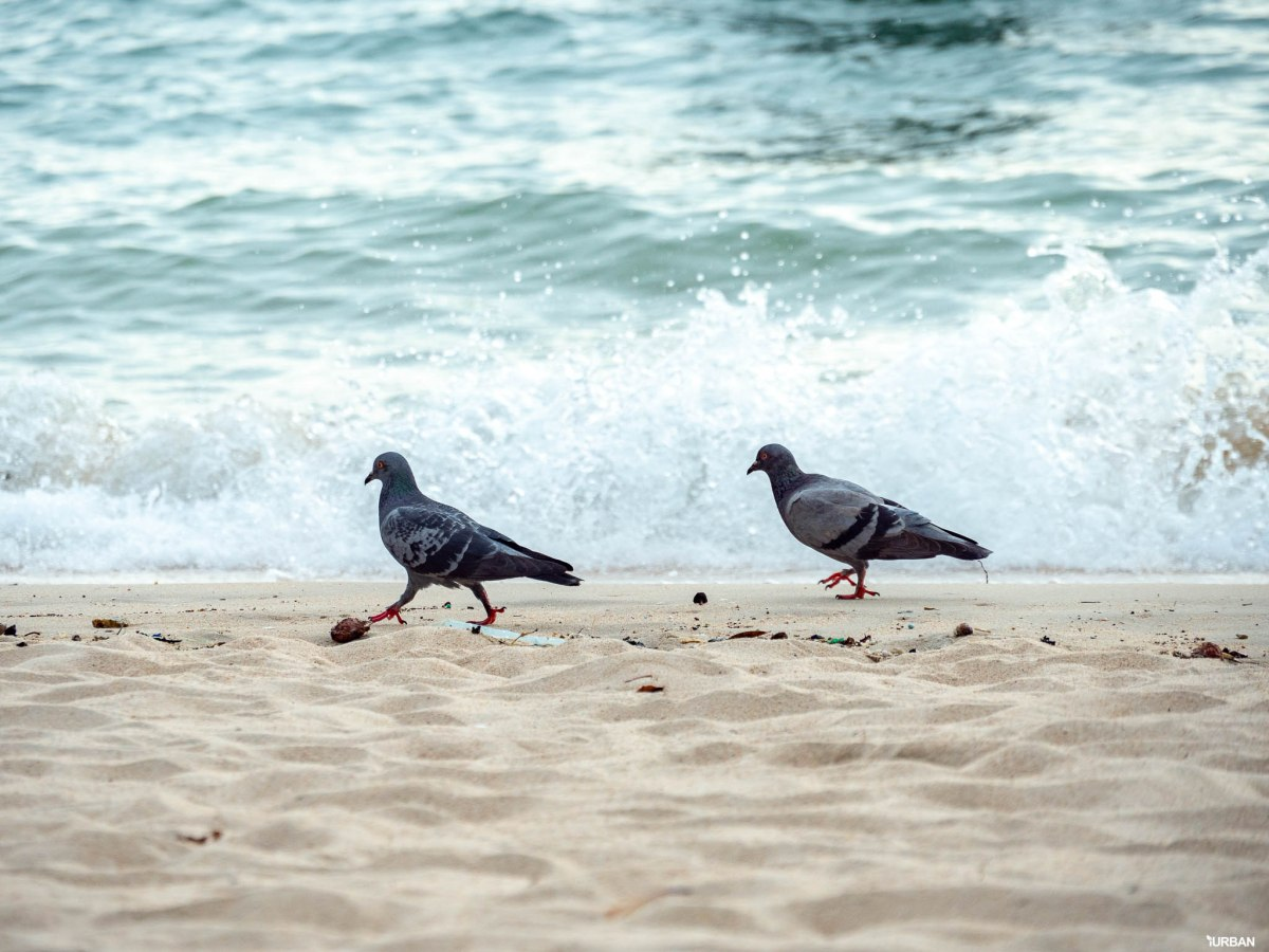 7 ชายหาดทะเลพัทยา ที่ยังสวยสะอาดน่าเที่ยวใกล้กรุงเทพ ไม่ต้องหนีร้อนไปไกล ก็พักได้ ชิลๆ 180 - Beach