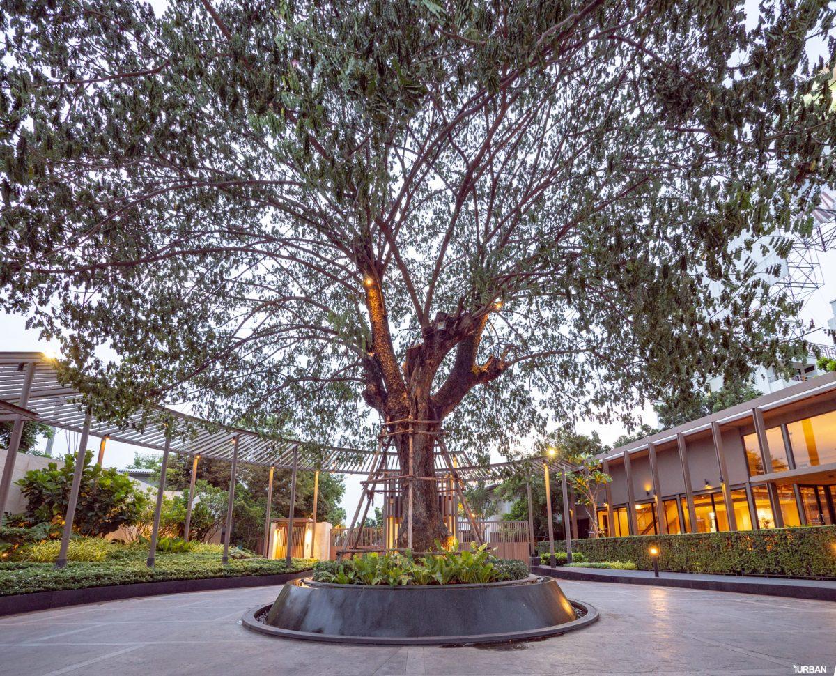 รีวิว บารานี พาร์ค ศรีนครินทร์-ร่มเกล้า บ้านสไตล์ Courtyard House ของไทยที่ได้รางวัลสถาปัตยกรรม 170 - Baranee Park